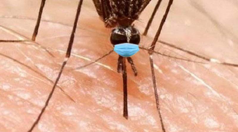 El Mosquito del Nilo deberá llevar mascarilla cuando se pose sobre humanos